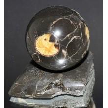 Шар Танатоценоз, Аммонит 37 мм №2033
