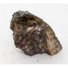 АММОНИТ №752 (фрагмент)